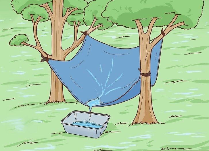 dgslmlral e1618527629400 - 5 методов добыть воду и еду, отправившись в лес!