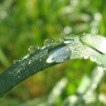 5 методов добыть воду и еду, отправившись в лес!