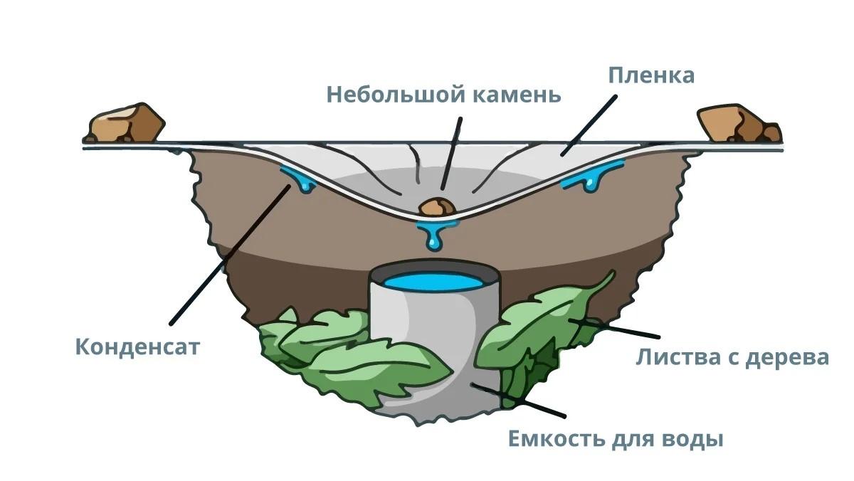 oiign - 5 методов добыть воду и еду, отправившись в лес!